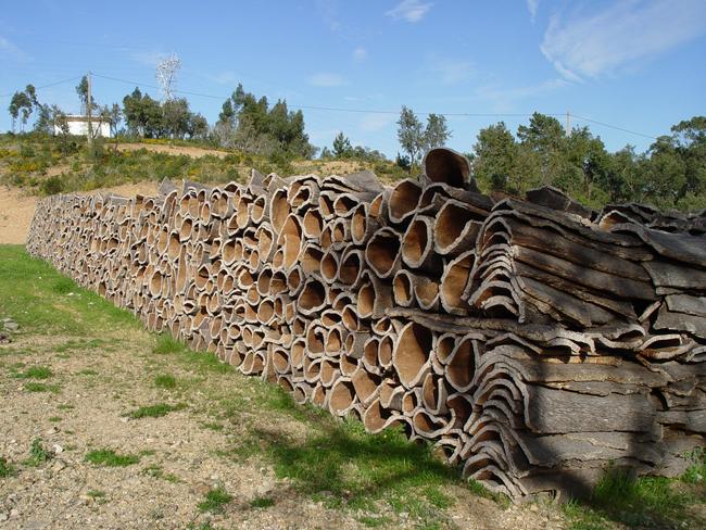 Так выглядит кора пробкового дерева